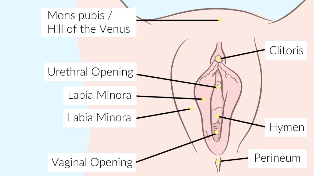 pussy entrance orgasm anatomy