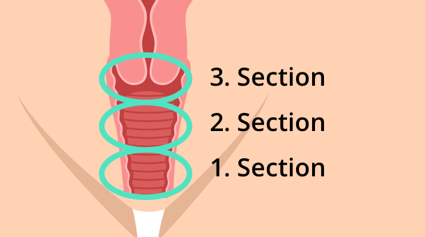 sections